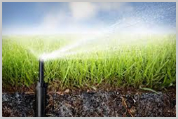 Irrigation Maintenance & Install